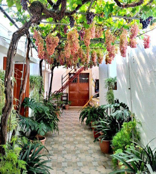 Homegrown grapes dangle from a metal pergola like mini pink and purple chandeliers, while tropical plants in various shapes and shades of green, furnish this charming courtyard in the village of Archanes.