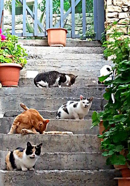 Came across this cluster of Cretan cats while exploring the village of Archanes. They look like they've been up to something, don't they?
