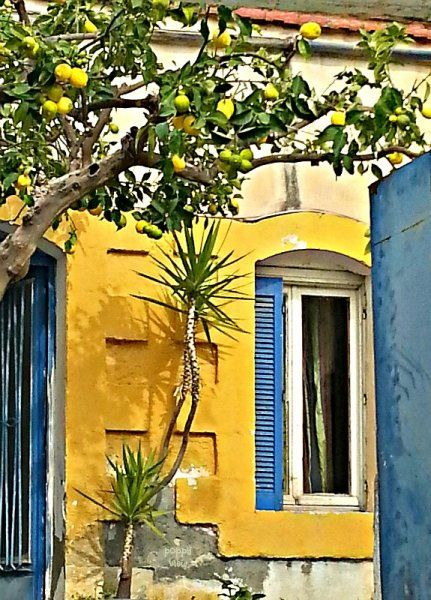 Radiant lemons brighten the exterior of this traditional house in our village. What a wonderful welcome they are to visitors who pass under them, their refreshing, fruity scent and cheery, yellow zest beaming with friendly hospitality.