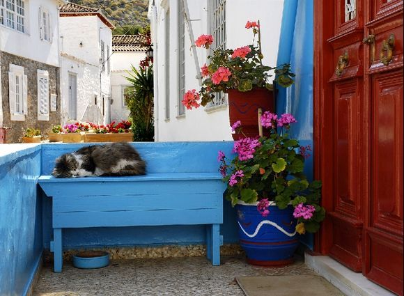 Cats from Hydra n°2